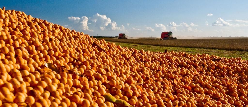 Conab divulga seu levantamento final da safra de grãos 2018/2019